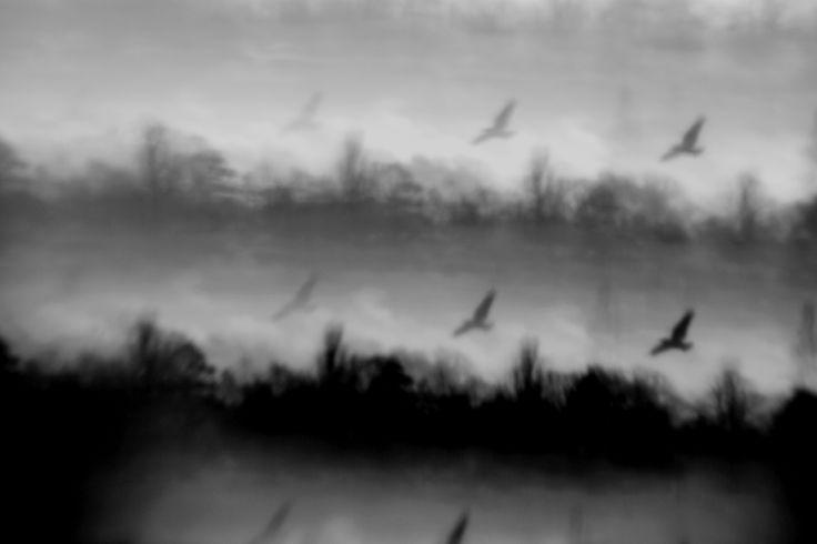Bird flight in Richmond. Ean Resner. #photography