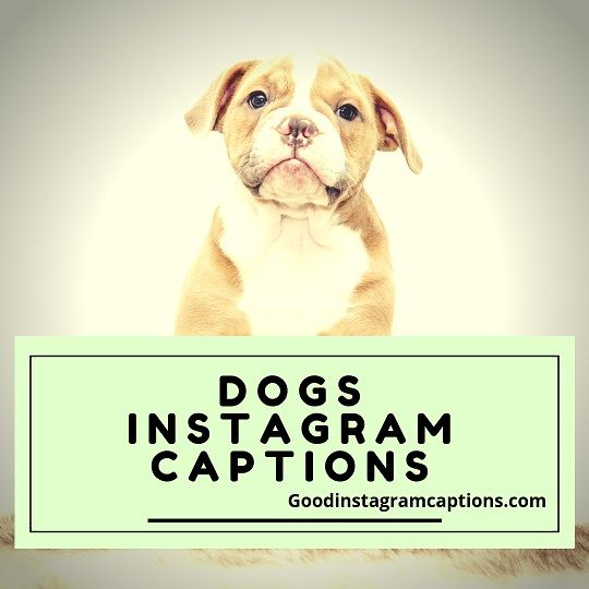 Captions For A Picture Of You And Your Dog