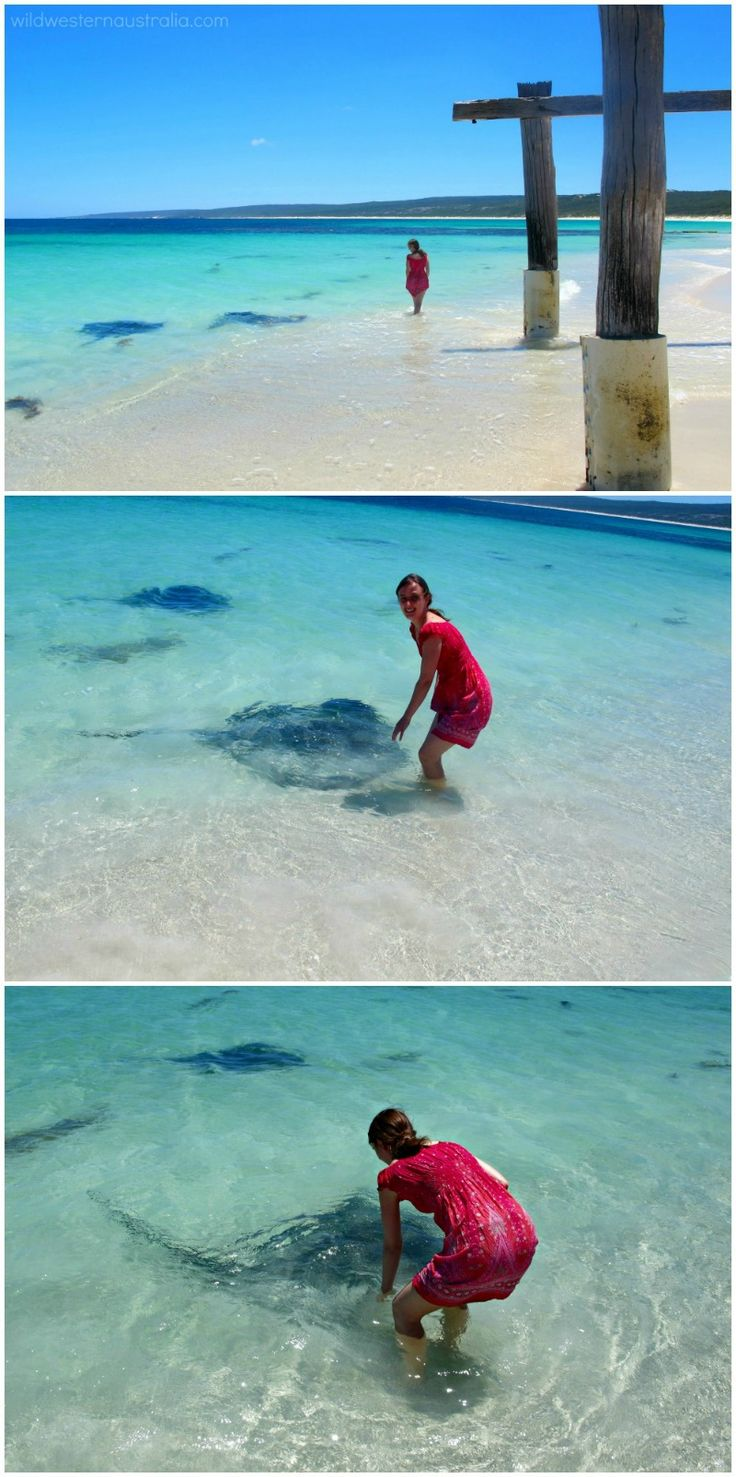 Meeting one of the friendly sting rays at Hamelin Bay near Margaret River in…