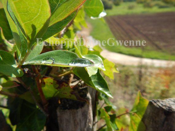 Photo goutte d'eau après un orage sur un petit pont de Dordogne