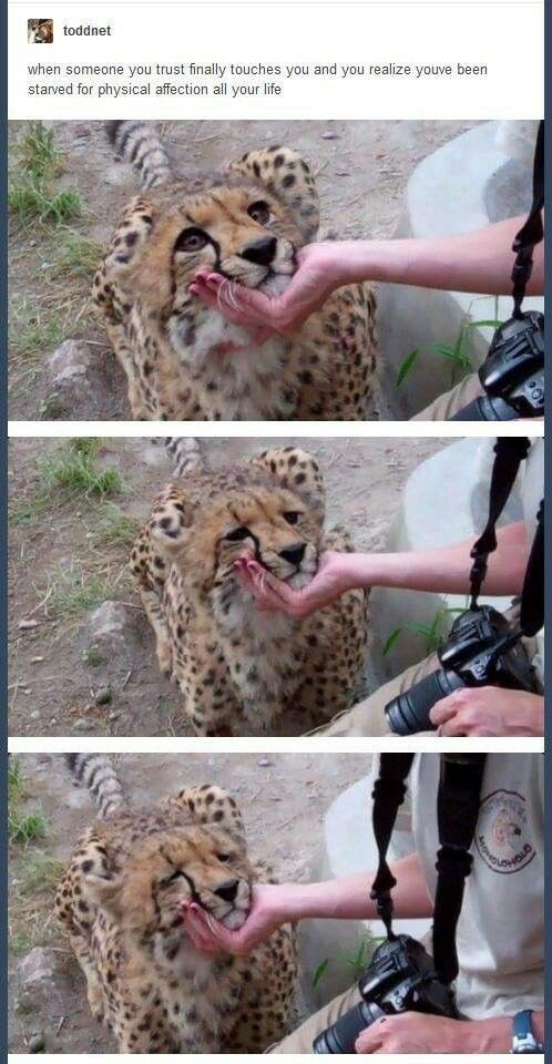 I don't care about the caption, but the look on this cheetahs face is so sweet.