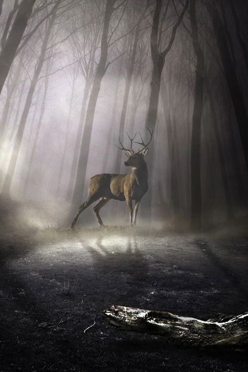 Untitled By Violet Kashi - Incredible image of a male deer, looking into the light in a dark forest.