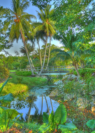 1000 images about w palm beach fl on pinterest palm - West palm beach botanical garden ...