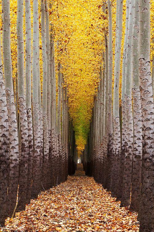 Walking towards the light.... by Dylan MacMaster   Tree farm near Boardman, Oregon.