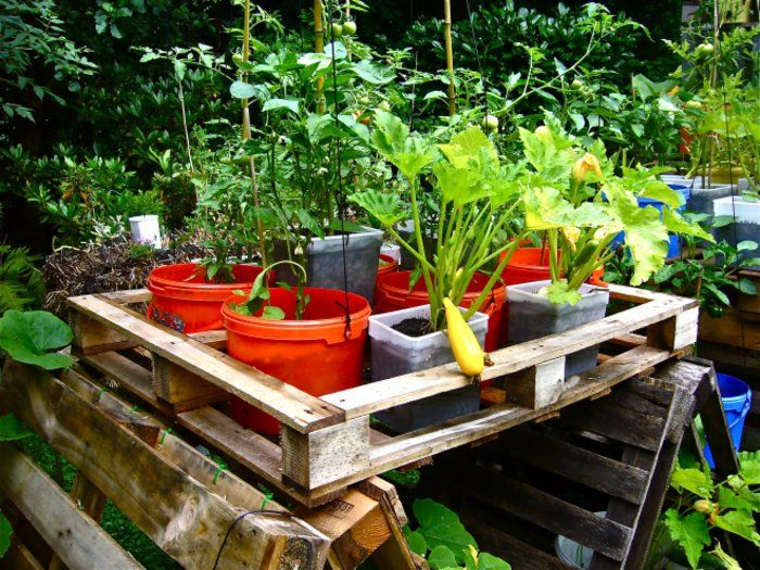 172 best astuces jardinage images on Pinterest Gardening