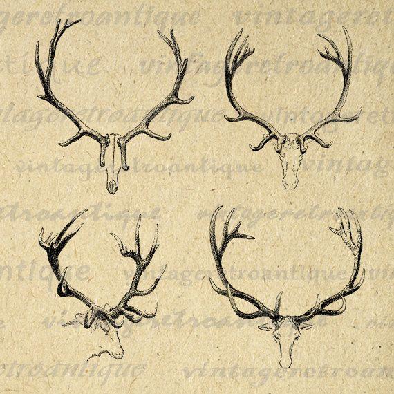 Real reindeer antlers - photo#22