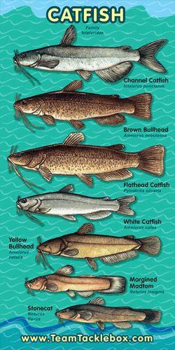 25 unique catfish bait ideas on pinterest homemade for Best catfish rig for bank fishing
