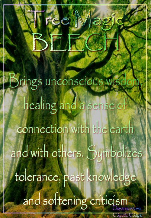 Beech - Brings unconscious wisdom, healing and a sense of connection with the earth and with others. Symbolizes tolerance, past knowledge and softening criticism
