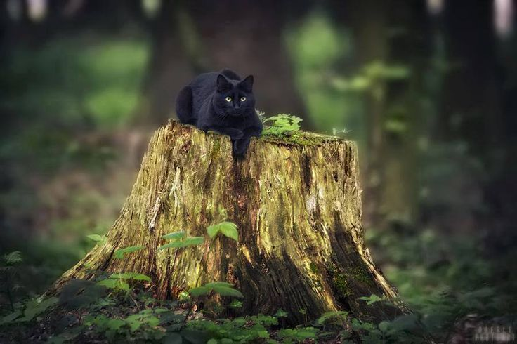 kleine zwarte tijger :D