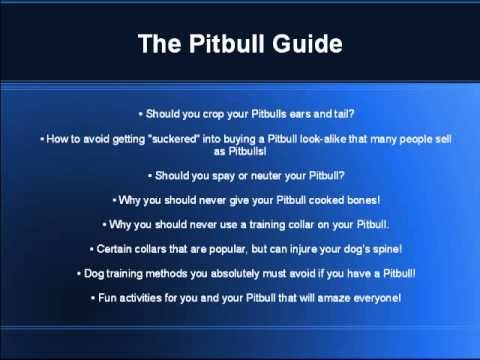 How to train a pitbull - Pitbull training tips
