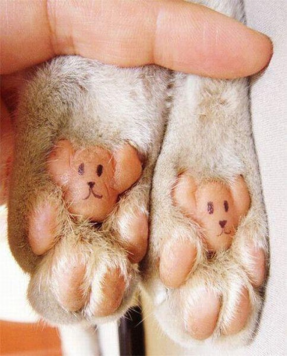 Google Image Result for http://cdn.cutestpaw.com/wp-content/uploads/2011/12/Cats-bear-feet-l.jpg