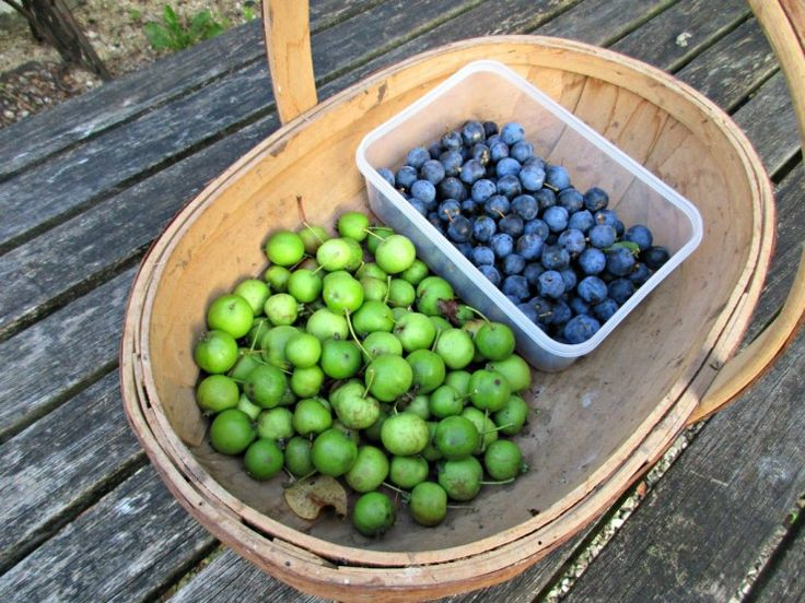 Foraged berries that have been frozen can be used for baking, making juices, jellies, jams, fruit spirits and wines. With Sloes, it means you don't have to faff about sticking pins into them, and with rose hips, you wont need to mince them up before making jelly or cordial.