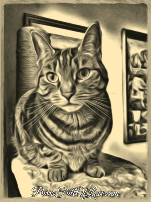 caturday art bluehost new year sale