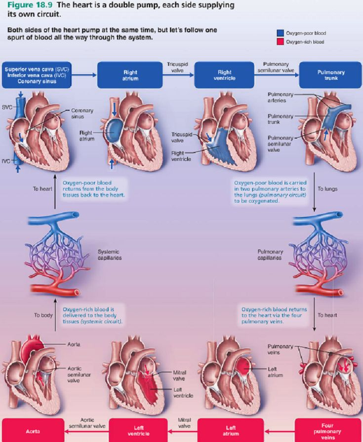The most amazing & thorough visual explanation of [Blood Flow Through the Heart] that I have ever seen.