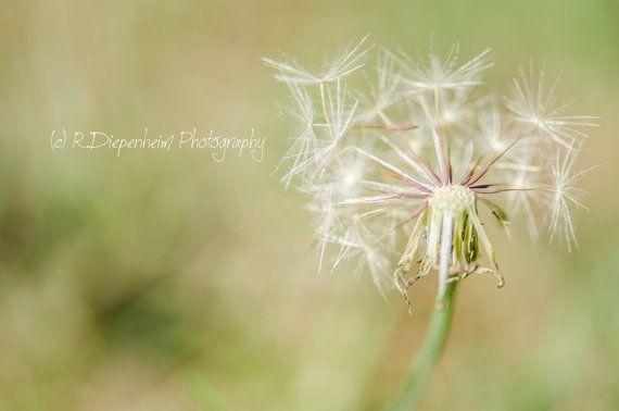 Broken Dandelion by RDiepenheimFoto on Etsy, $10.00