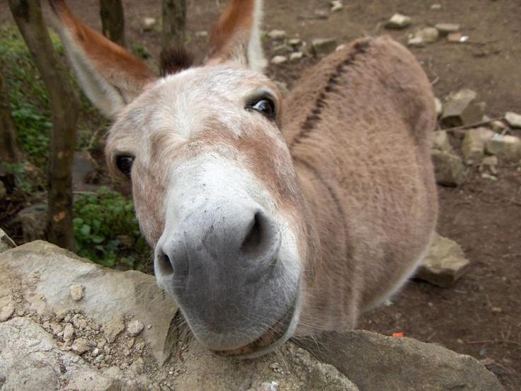 Animals friends image by Deborah Raven on donkeys, mules