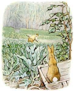 55 best mr mcgregors garden images on rabbit