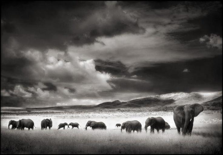 © Nick Brandt - great wild life photos