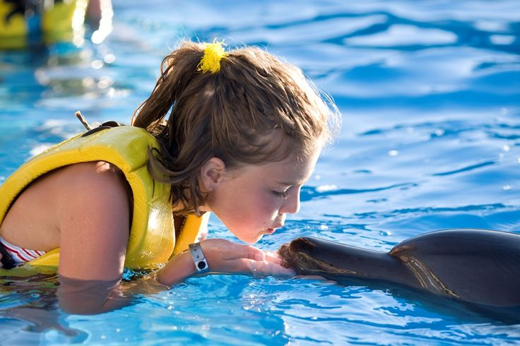 Adventure means it's Cancun from diving with shark whales to playing with dolphins. #adventure #cancuntravel #enjoy
