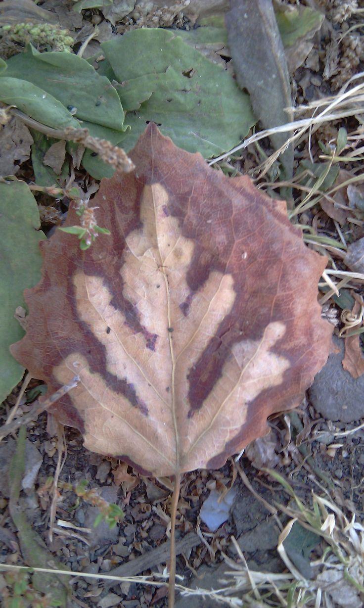 Скоро осень/autumn soon