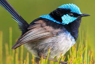 William Cooper's life as colourful as his celebrated birds