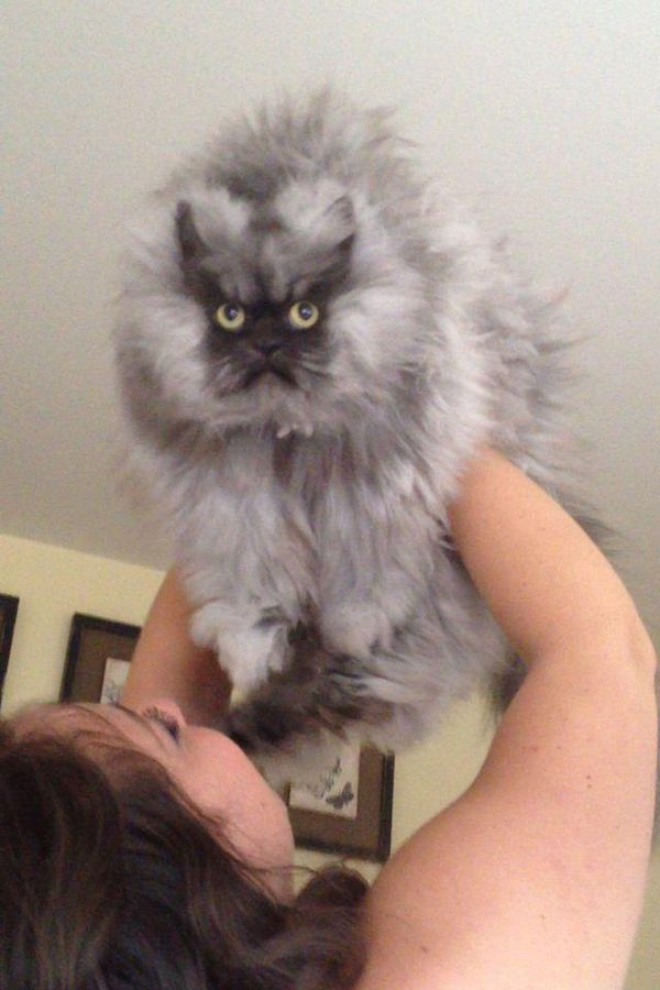 Meet Colonel Meow of the Department of Consternation