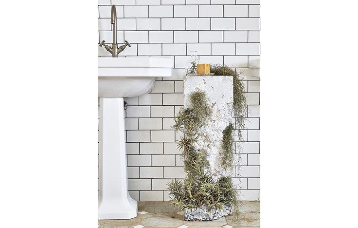 Oltre 1000 idee su piante da bagno su pinterest bagno - Piante in bagno ...