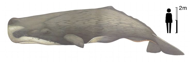 Minor Project: Different Whale Species