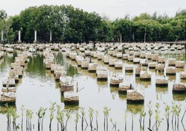Menjelajahi Pekalongan Mangrove Park