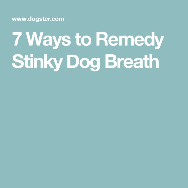7 Ways to Remedy Stinky Dog Breath