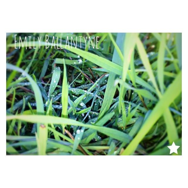 An early morning walk with the dew on the grass  #madewithstudio