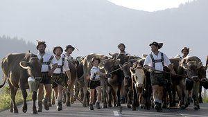 Oberstaufen, Alemanha: pastores bávaras no traje tradicional conduzir o gado de volta para casa das montanhas