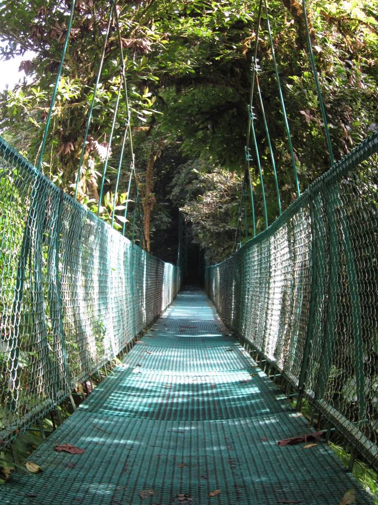 Canopy Walks  Monteverde, Costa Rica  August 2011