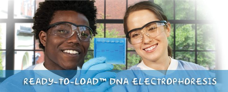 DNA Electrophoresis (Ready-to-Load)