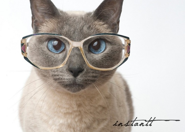 37 Best Cats In Sunglasses Images On Pinterest Kitty