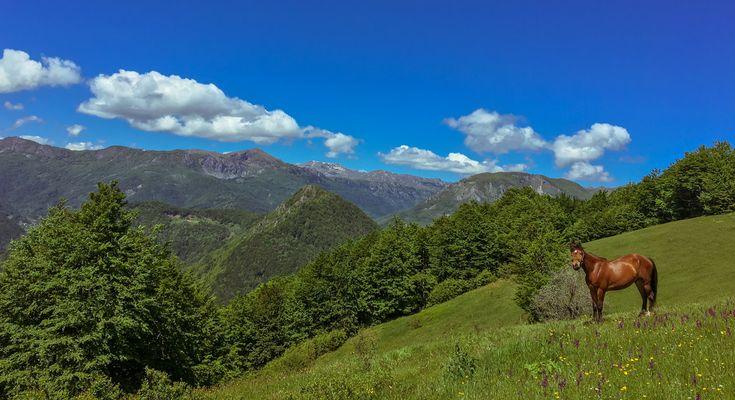 Wild nature within Biogradska Gora National Park, Montenegro
