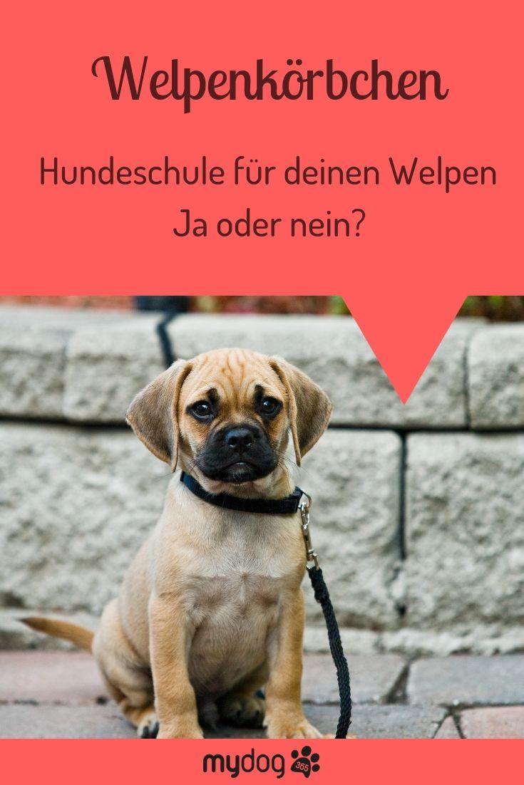 Als Frischgebackene Hundemama Oder Hundepapa Stellst Du Dir Mit Sicherheit Die Frage Ob Du Mit Deinem Welpen In Eine Hundeschule Ge Hundeschule Hunde Welpen