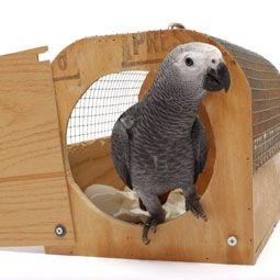 If your pet bird doesn't like to travel, use these tips to teach it to enjoy traveling with you. (I like the carrier!)