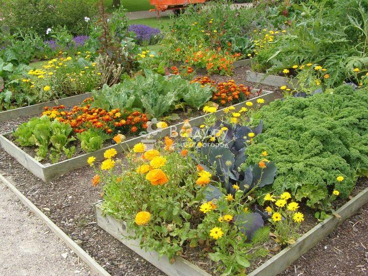 Планируем посадки: разберемся в совместимости растений и овощей  Какие растения растут вместе. Что лучше посадить с морковью, капустой, картофелем, луком, баклажанами и бобовыми