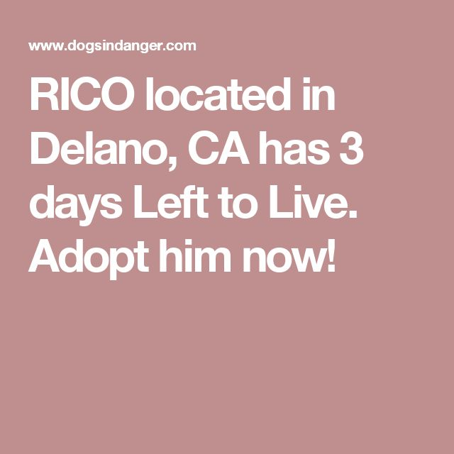 RICO located in Delano, CA  has 3 days Left to Live. Adopt him now!