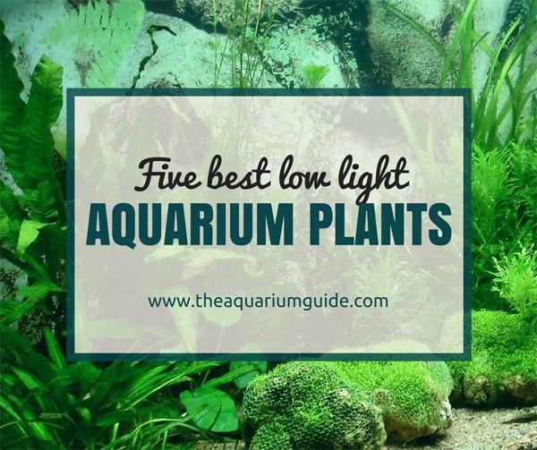 5 Best Low Light Aquarium Plants | The Aquarium Guide