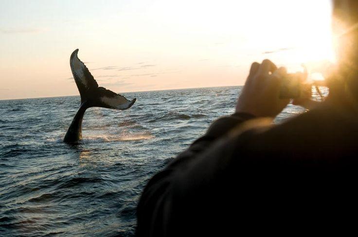 http://www.novascotia.com/see-do/tours/brier-island-whale-seabird-cruises/2331