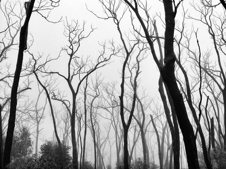 Alessandro Cerutti Photographer // | Kinglake Bushfire