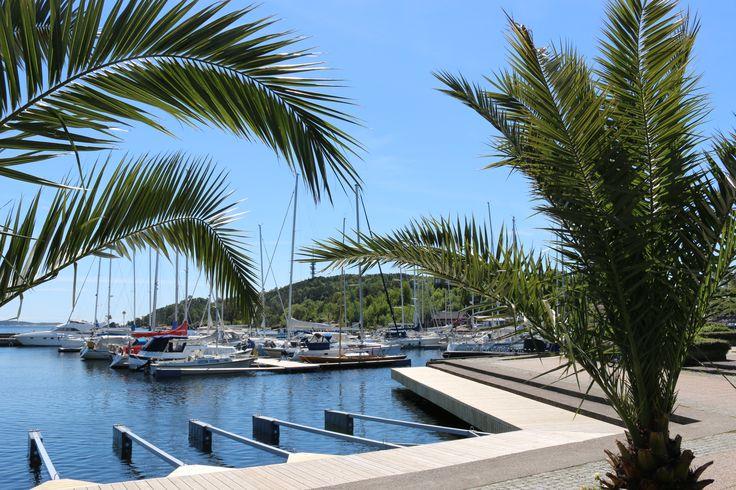 Ja, det er helt sant -  i Kristiansand er det palmer i Gjestehavna. Foto: Inge Dalen©Visit Sørlandet