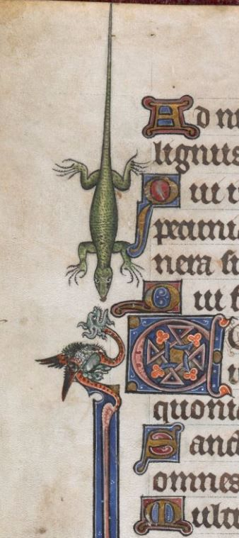 Medieval lizard vs. dragon. Medieval Border Dragon and Magpie, Add MS 24686, f.18v, c 1284-1316, Psalter, known as 'The Alphonso Psalter' (formerly known as 'The Tenison Psalter').