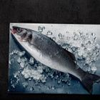Sea bass on ice and steel