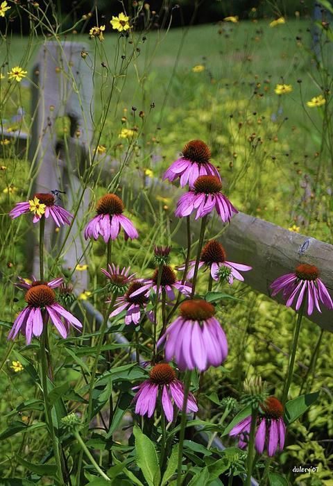 230 Best Quot Wildflowers Quot Images On Pinterest Wildflowers