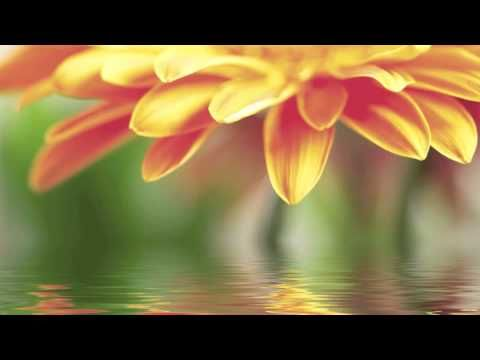 Sounds of Nature: Cello & Flute Music with Nature Sounds, Birds, Water and Rain Sounds. White Noise