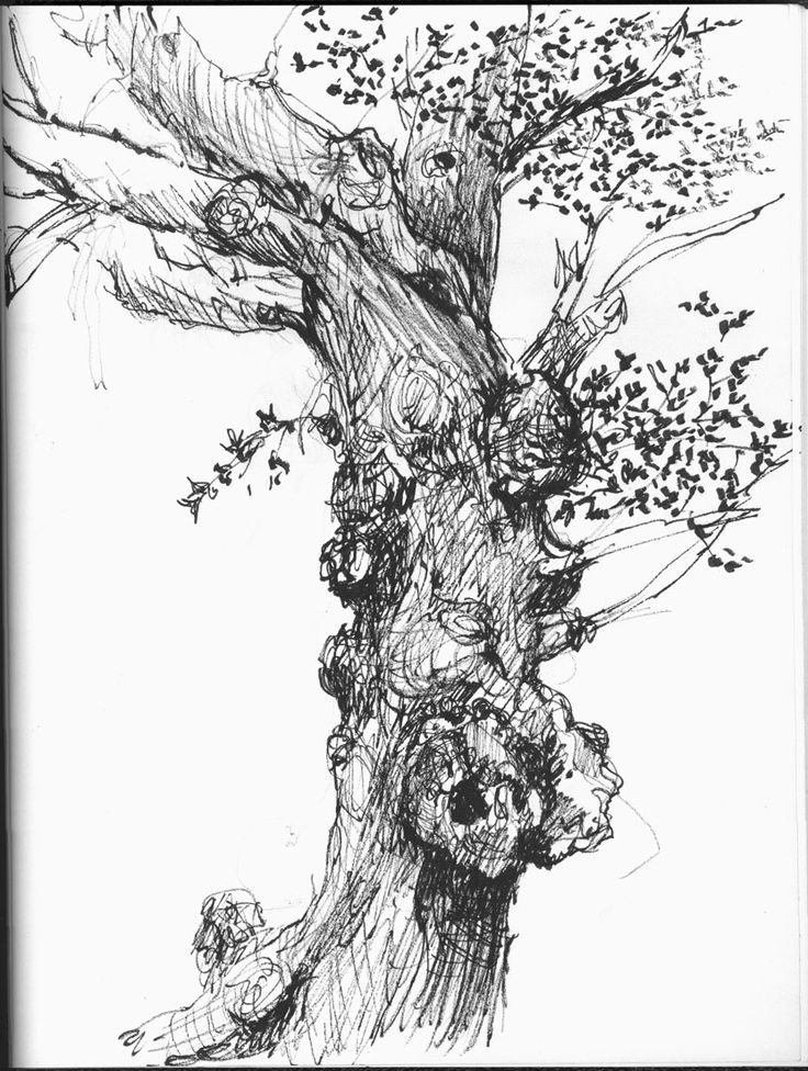 32 best tree sketches images on pinterest