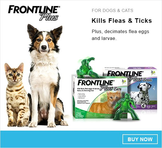 12 best pets images on pinterest coupon codes coupon and coupons rh pinterest com